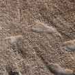 Stock Photo: Embossed footprints