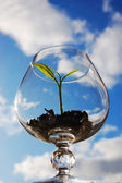 Young plant in a glass — Stock Photo