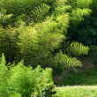 Green grassland with bamboo — Stock Photo