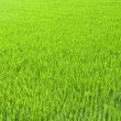 Beautiful green farm — Stock Photo