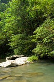 Trees and river — Stock Photo