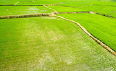 Landscape of terraced field — Stock Photo