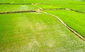 Landscape of terraced field — Stock Photo
