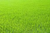 Beautiful green farm — Stock Photo