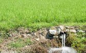 Outfall and paddy fields — Stock Photo