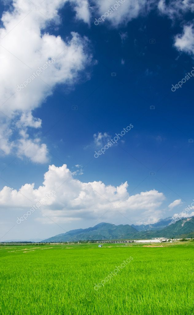 It is a beautiful landscape of green farm with blue sky and white clouds. — Stock Photo #2161235