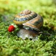 Snail creeping on a green grass — Stock Photo