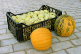 Apples in a plastic box and pumpkins — Stock Photo