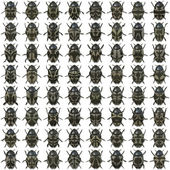 64 bugs — Stock Photo