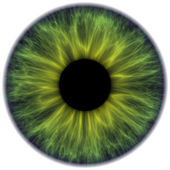 Iris — Stockfoto