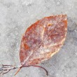 Royalty-Free Stock Photo: Frozen leaf