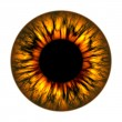 Fire eye - Stock Photo
