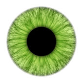 Green iris — Stock Photo