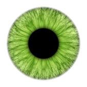Yeşil iris — Stok fotoğraf