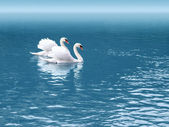 Two swan — Stock Photo