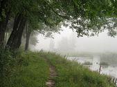 Fog — Stock Photo