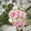 Bouquet of pink and white roses — Foto de Stock