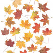 autumn blatt — Stockfoto #2048054