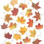höst löv — Stockfoto