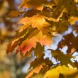 Autumn leafs — Stock Photo #2064888