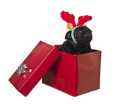 Dog in a gift box with reindeer antlers — Stock Photo