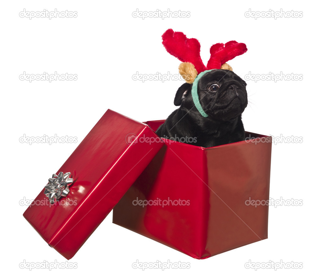 Dog in a gift box with reindeer antlers isolated on white — Stock Photo #2065170