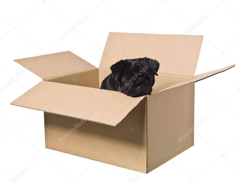 Dog in a box isolated on a white background — Stock Photo #2065174