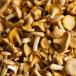 Chantarelles — Stock Photo