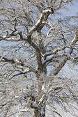 Träd på vintern — Stockfoto