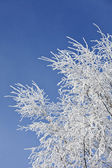 Winter branch — Stock Photo