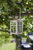 фонарь в дерево — Стоковое фото