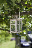 Lantern in tree — Stock Photo