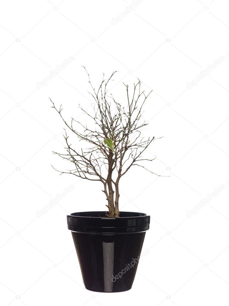 枯萎的盆栽的植物