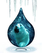 Polar bear and climate change — Stock Photo