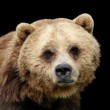 Close-up sad Grizzly bear isolated — Stock Photo