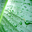 Drops of water on big leaf - Stock Photo