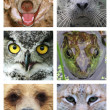 Faces of animals on white — Stock Photo