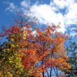 Fall colors and blue sky - Stock Photo
