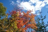 Fall colors and blue sky — Stock Photo