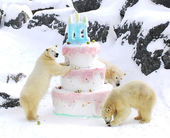 Polar bears funny giant birthday cake — Stockfoto