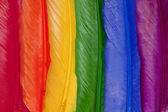 Rainbow feathers — Stock Photo