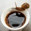 Thirsty snail — Stock Photo