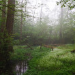 Stock Photo: Forest creek and hazy morning