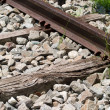 Rails — Stock Photo #2611295