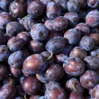 Plum — Stock Photo #2664325