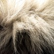 Fur — Stock Photo
