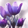 Stock Photo: Violet flowers on backlight