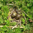 Bird's-nest - Stock Photo
