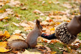 Squirrel in the park — Stockfoto