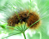 3 Caterpillar — Foto de Stock
